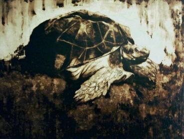 tortoisesokol